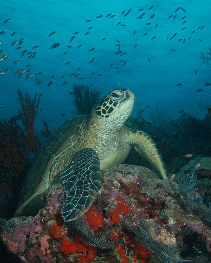 Marine Research Foundation turtle